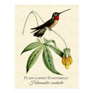 Postal Arte capsulado llano del vintage del colibrí de