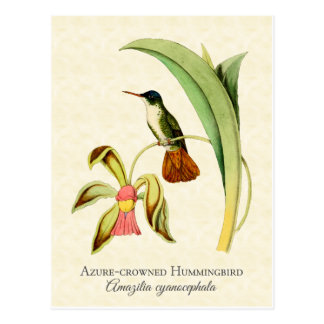 Postal Arte coronado azul del vintage del colibrí