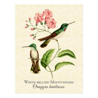 Postal Arte del vintage del colibrí de la gema de la