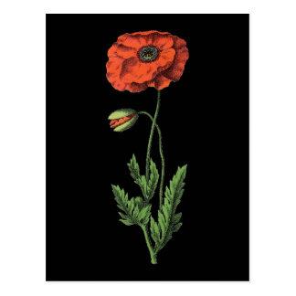 Postal Arte rojo del vintage de la amapola