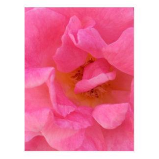 Postal Arte rosado del pétalo color de rosa -