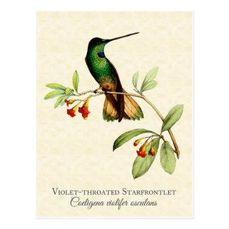 Postal Arte Throated violeta del vintage del colibrí