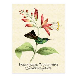 Postal atada bifurcación del arte del colibrí de