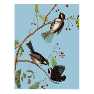 Postal Audubon: Chickadee