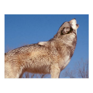 Postal Aullido del lobo