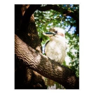 Postal Australia linda Kookaburra