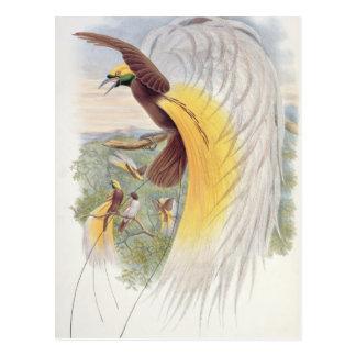 Postal Ave del paraíso, de 'pájaros de New Guinea