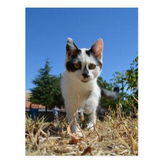 Postal Aventura del gato del gatito