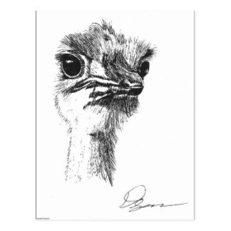 Postal Avestruz