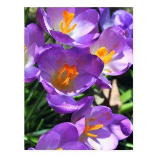 Postal Azafrán flowers.jpg