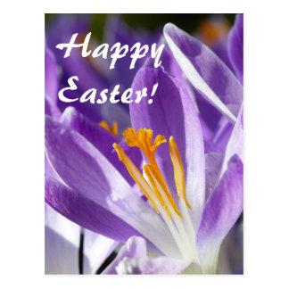 Postal Azafrán violeta 001.2.T de la primavera