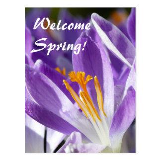 Postal Azafrán violeta 001.T de la primavera