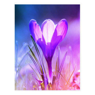 Postal Azafrán violeta 02.9.F