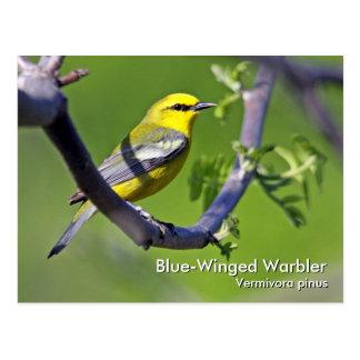 Postal Azul-Coa alas de la curruca