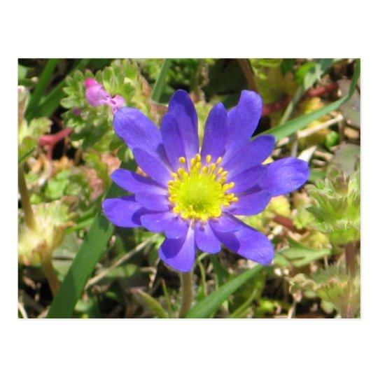 Postal azul de la flor