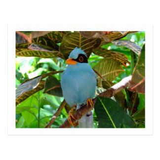Postal azul de la foto del pájaro
