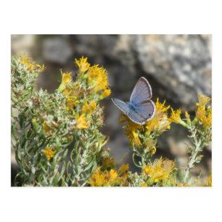 Postal azul de la mariposa de Reakirt