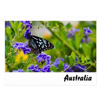 Postal azul de la mariposa del tigre