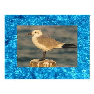 Postal azul del agua de la playa y del pájaro de m