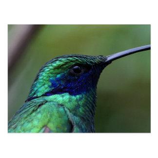Postal azul del pájaro del tarareo