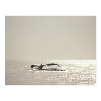 Postal Ballena jorobada, cola sobre superficie del agua