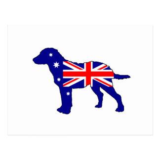 Postal Bandera australiana - perro perdiguero de bahía de