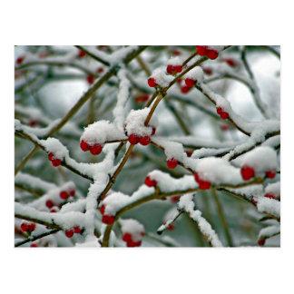 Postal Bayas rojas en la nieve del invierno