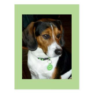 Postal Beagle dulce nombrado Spot