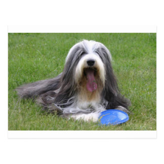 Postal Bearded_Collie