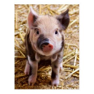 Postal Bebés lindos del corral de los animales del campo