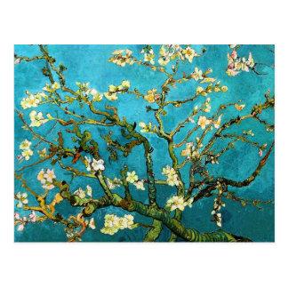 Postal Bella arte floreciente del árbol de almendra de