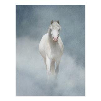 Postal belleza blanca