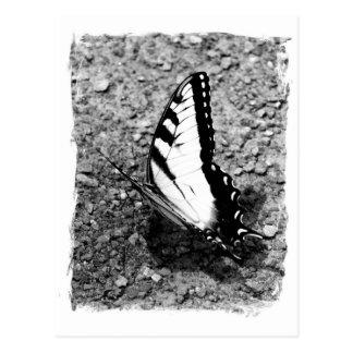 Postal Belleza de la mariposa - foto del primer del