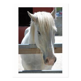 Postal Belleza del caballo blanco