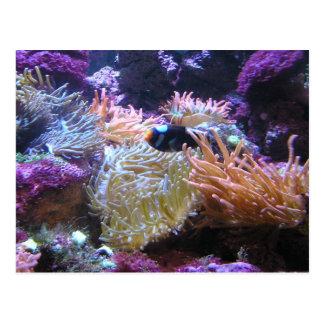 Postal Belleza subacuática