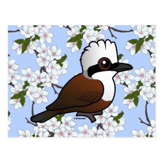 Postal Birdorable Laughingthrush Blanco-con cresta