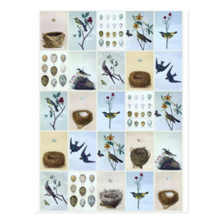 Postal Birds and Nests