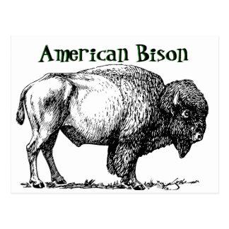 Postal Bisonte americano del búfalo