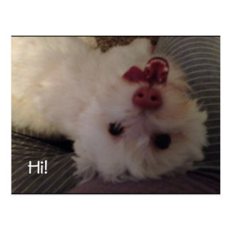 Postal blanca al revés divertida del perrito hola
