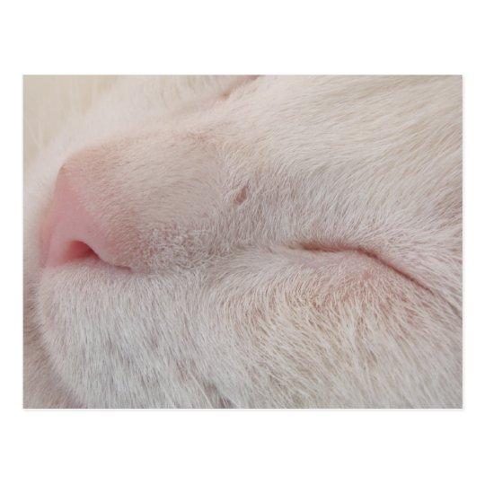 Postal blanca del gato