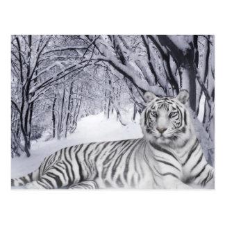 Postal blanca del tigre de la nieve