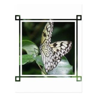 Postal blanca y negra de la mariposa