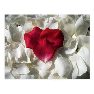 Postal blanca y roja de los pétalos color de rosa