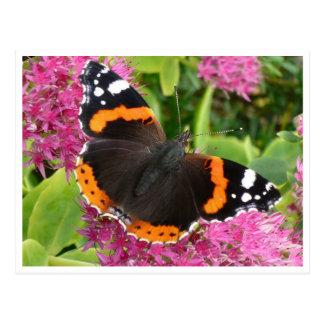 Postal blanco y negro anaranjada de la mariposa