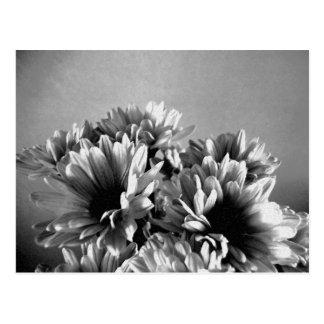 Postal blanco y negro de Floreal