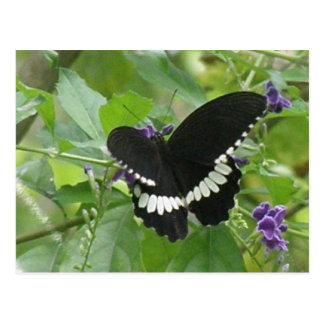 Postal blanco y negro de la mariposa