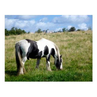 Postal blanco y negro del caballo/del potro
