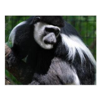 Postal blanco y negro del mono