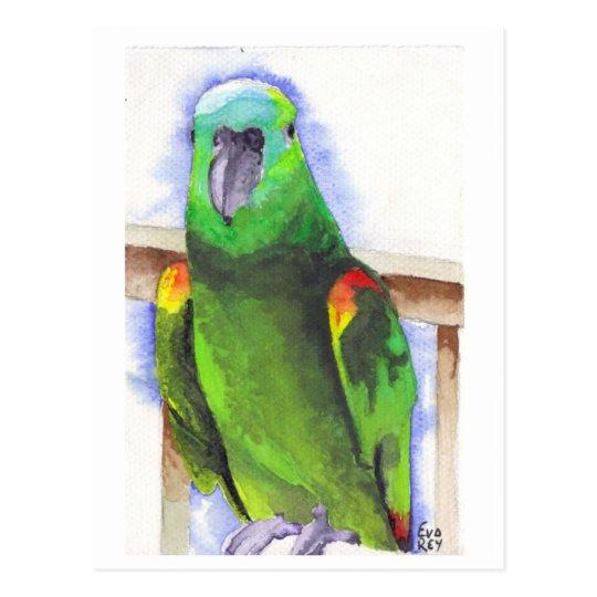 Postal Blue The Parrot