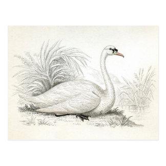 Postal bonita del ejemplo del cisne del vintage